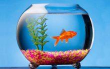10 интересных фактов об аквариумах