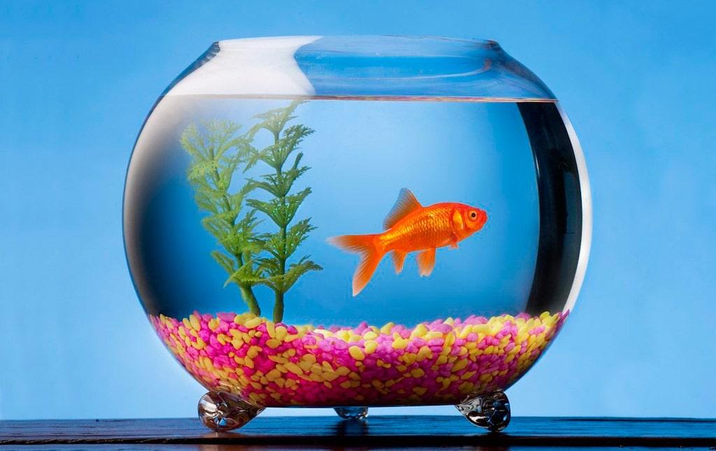 Interesnye-fakty-ob-akvariumah