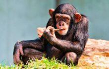 12 интересных фактов об обезьянах