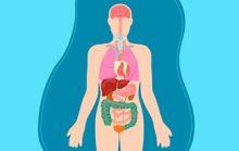 24 интересных фактов об органах человека