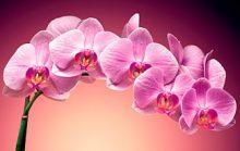 20 интересных фактов об орхидеях