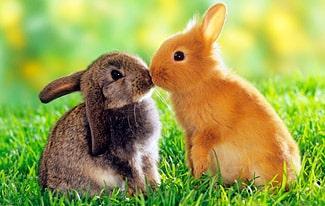 16 интересных фактов про зайцев