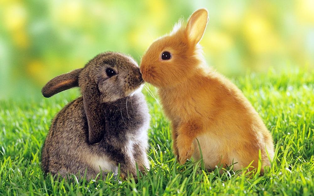 Interesnye-fakty-pro-zajczev