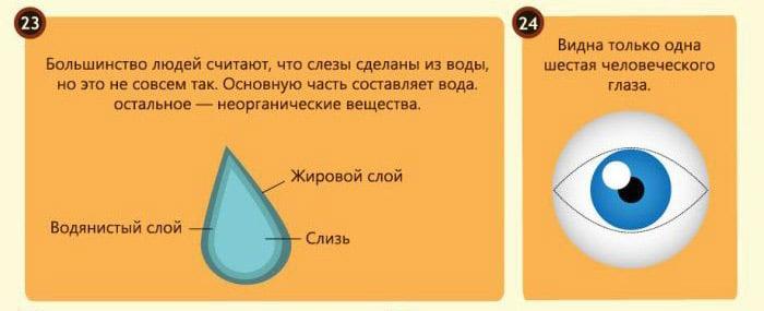 Interesnyie-faktyi-o-glazah-10