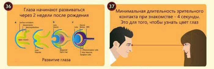 Interesnyie-faktyi-o-glazah-15