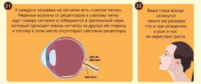 Interesnyie-faktyi-o-glazah-9