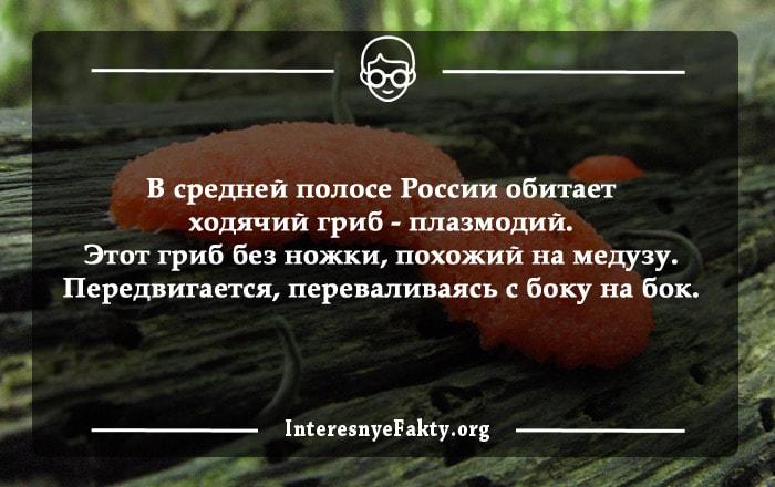 Interesnyie-faktyi-o-gribah-1