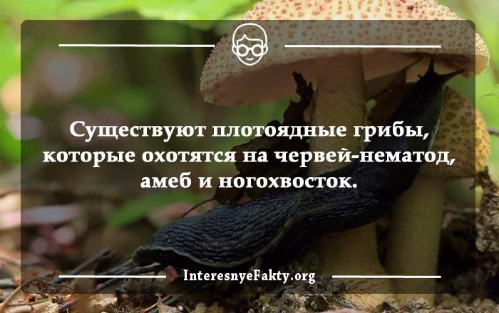Interesnyie-faktyi-o-gribah-3