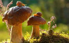 Факты о грибах, которые вас очень удивят
