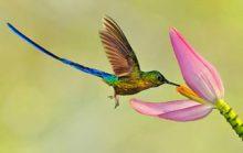 Загадочная птица колибри