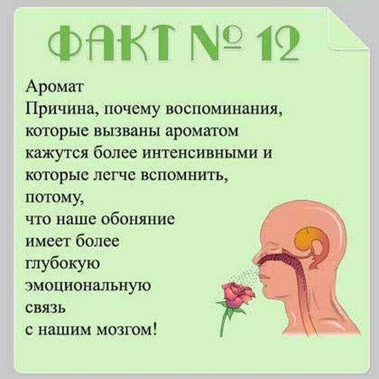 Interesnyie-faktyi-o-mozge-12