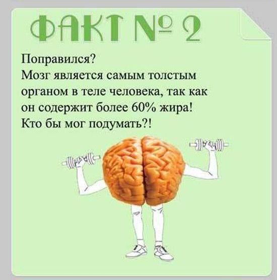 Interesnyie-faktyi-o-mozge-2