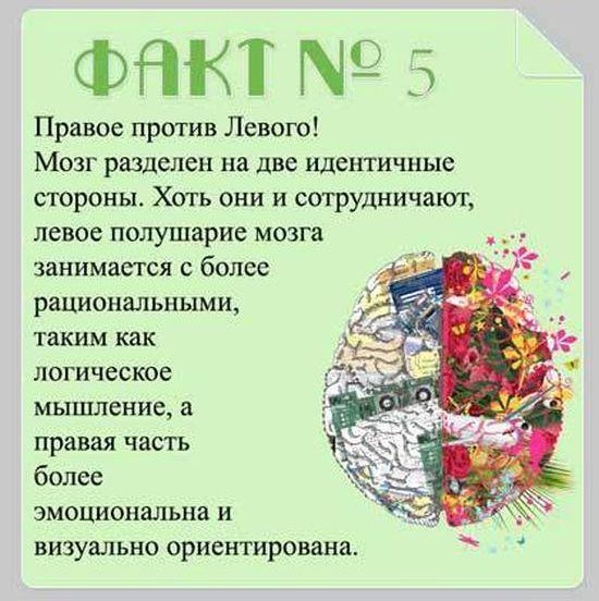 Interesnyie-faktyi-o-mozge-5