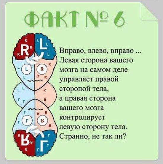 Interesnyie-faktyi-o-mozge-6