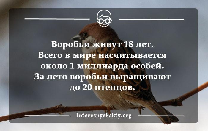 Interesnyie-faktyi-o-ptitsah-1