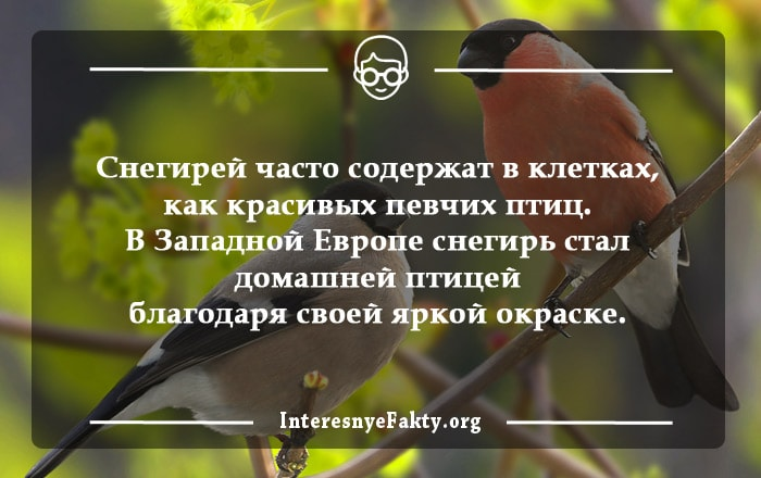 Interesnyie-faktyi-o-ptitsah-2