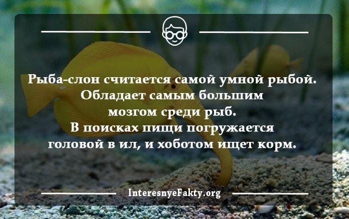 Interesnyie-faktyi-o-ryibah-1