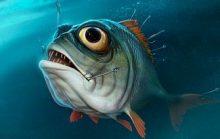 Интересные факты о рыбах