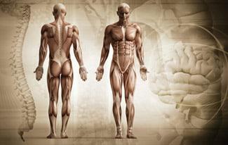 Интересные факты о строении человека