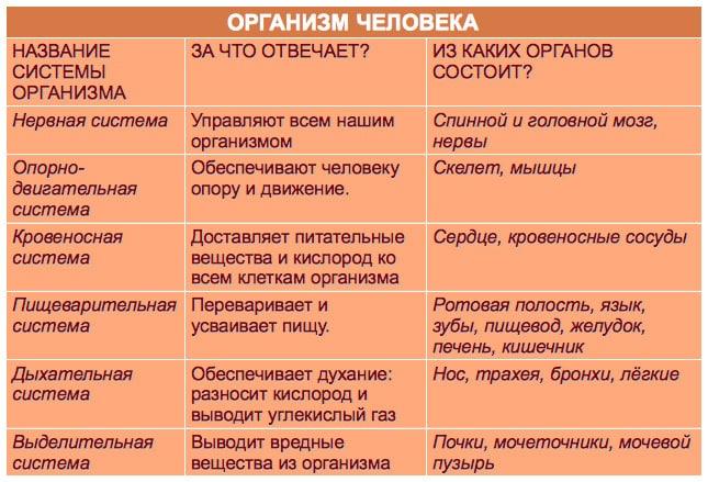 Interesnyie-faktyi-o-stroenii-cheloveka.-Organizm