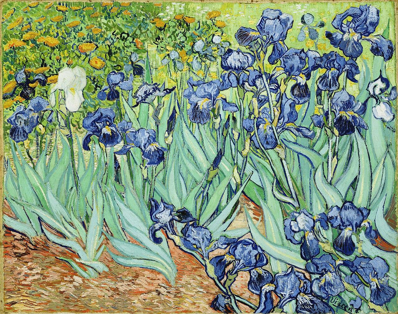 Irisyi-1889