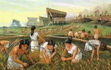 История сельского хозяйства древних