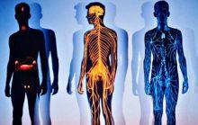 Из чего состоит тело человека