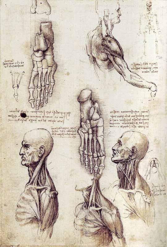 Kartinyi-Leonardo-da-Vinchi-18