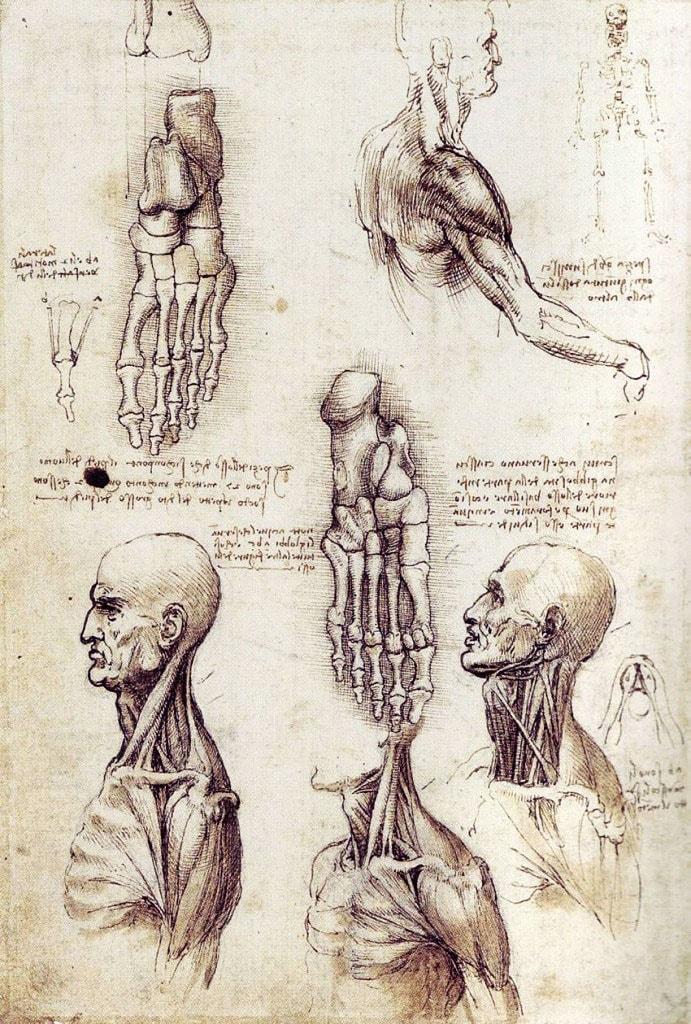 Kartinyi-Leonardo-da-Vinchi-30