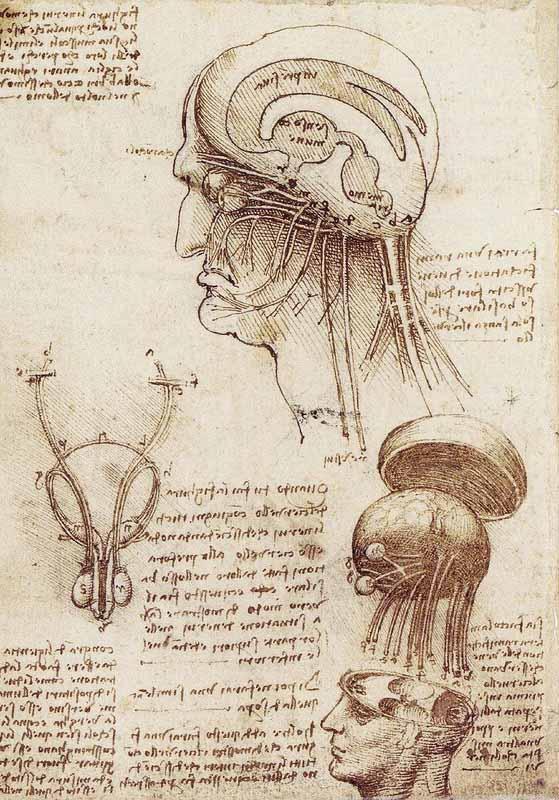 Kartinyi-Leonardo-da-Vinchi-6