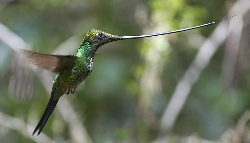 Kolibri-Ptitsa-12