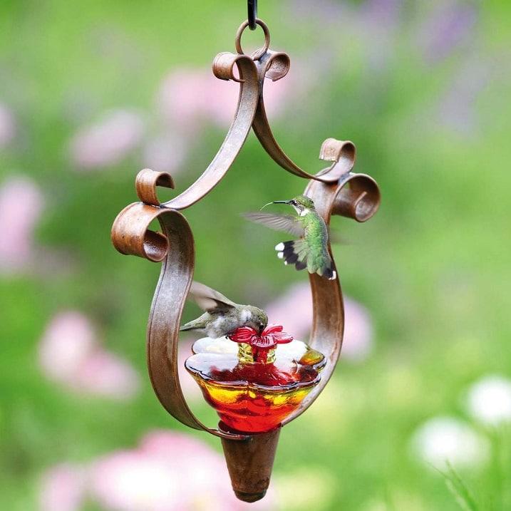 Kolibri-Ptitsa-3