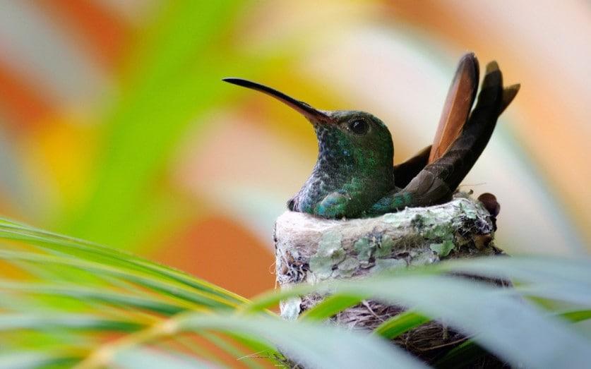 Kolibri-Ptitsa-30