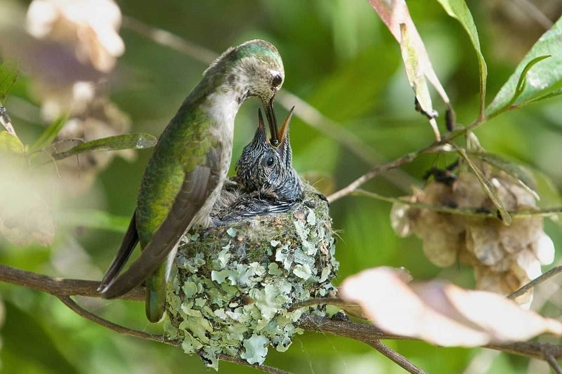 Kolibri-Ptitsa-35