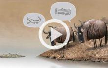 Крокодил и коровы (20 млн. просмотров)