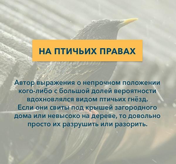 Kryilatyie-vyirazheniya-Na-ptichih-pravah