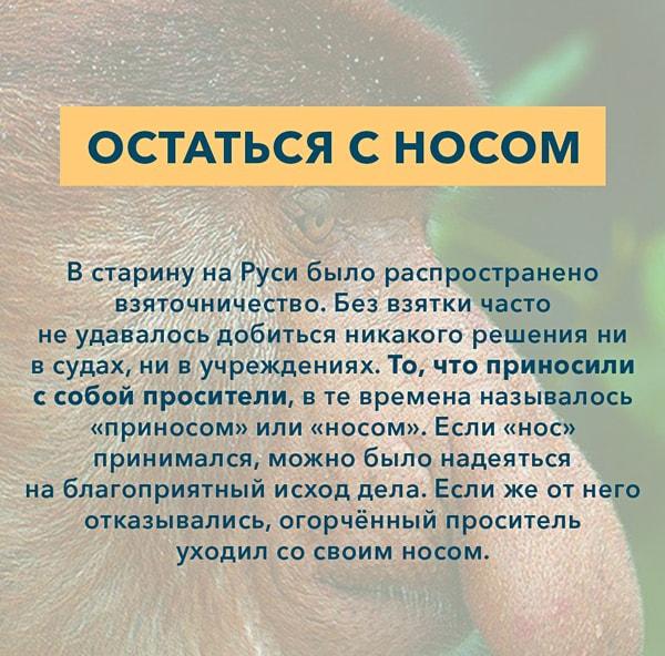 Kryilatyie-vyirazheniya-Ostatsya-s-nosom