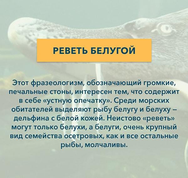 Kryilatyie-vyirazheniya-Revet-belugoy