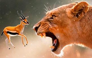 Лев и газель