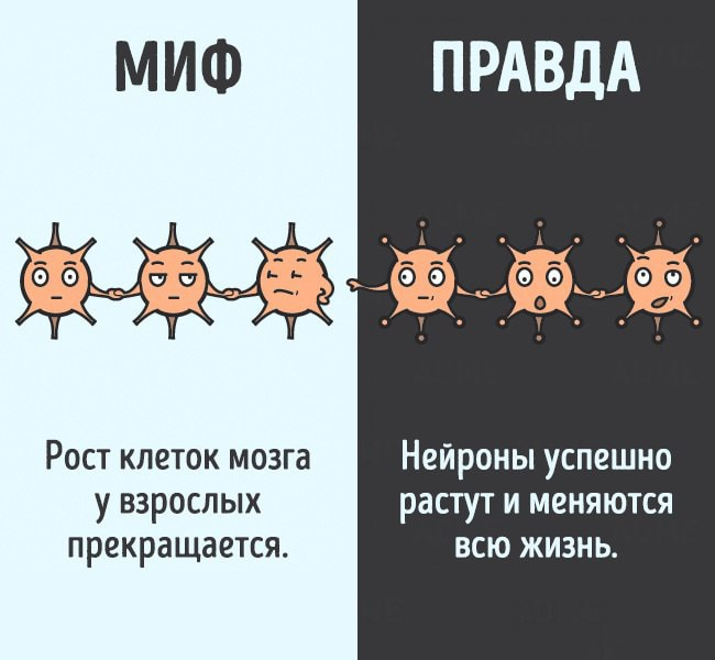 Mifyi-o-chelovecheskom-tele-12
