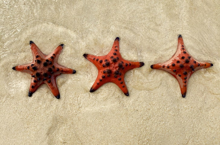 Morskie-zvezdyi-byivayut-ne-tolko-pyatikonechnyimi