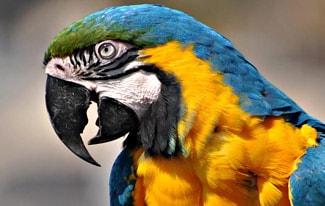 Почему попугай называется попугаем