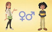 Половая система человека