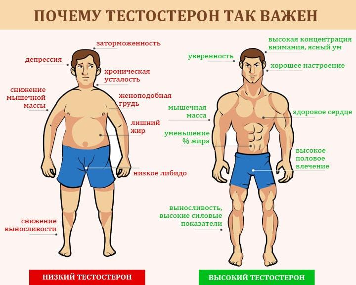 Povyishennyiy-testosteron