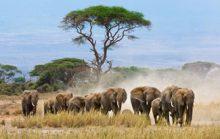 Все самое-самое в Африке