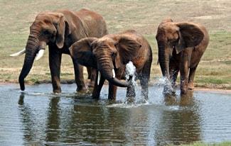 Самые знаменитые слоны