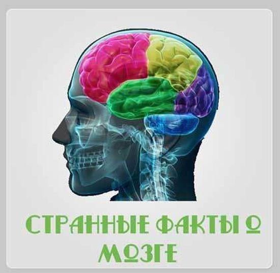 Strannyie-faktyi-o-mozge