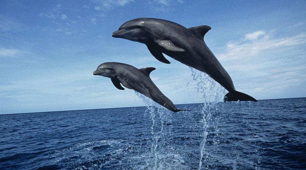 Ubijstvo-chernyh-delfinov-v-Danii
