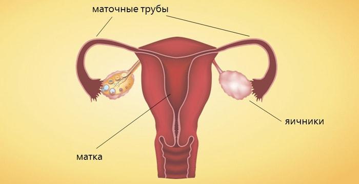 ZHenskaya-polovaya-sistema