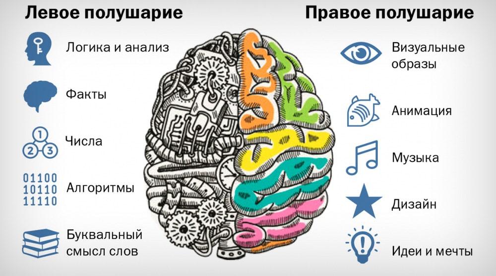Za-chto-otvechayut-levoe-i-pravoe-polusharie-mozga